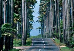 La plus ancienne et la plus belle route de Guadeloupe