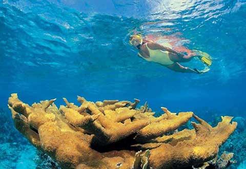 Nager dans la beauté
