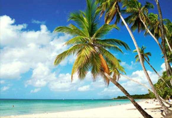 Cocotier, sable fin et mer turquoise sur une plage de Martinique