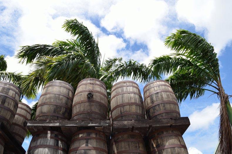 Tonneaux de rhum en Martinique