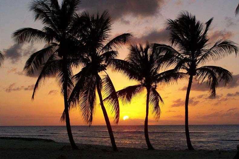 Coucher de soleil avec des cocotiers en Guadeloupe