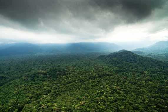 forêt amazonienne Guyane