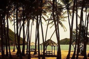 Cocotiers sur une plage de Guadeloupe