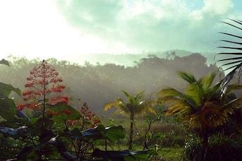 Forêt amazonienne en Guyane