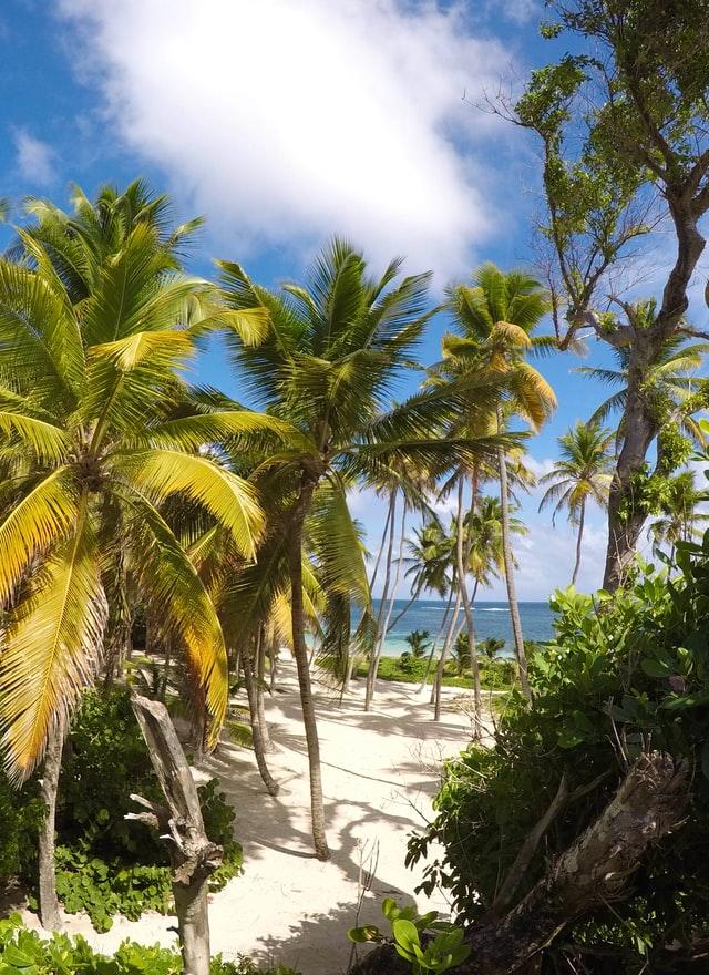 Paysage sur les cocotiers