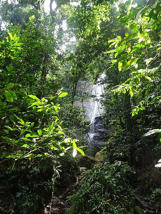 Cascade Couleuvre en Martinique