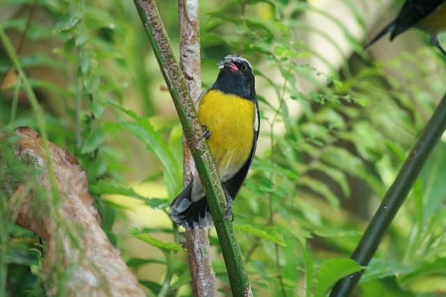 Oiseau sucrier lors d'une balade en forêt