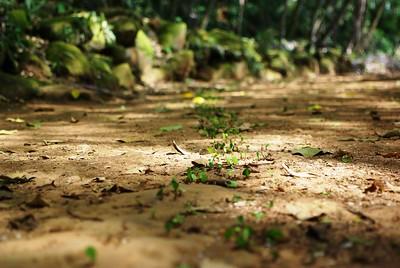 Randonnée en Guyane