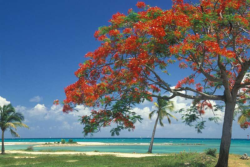 Visiter Sainte-Anne en Guadeloupe en voiture de location